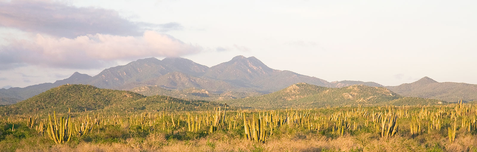 Baja Yoga Retreats in Mexico: Mountains & Desert