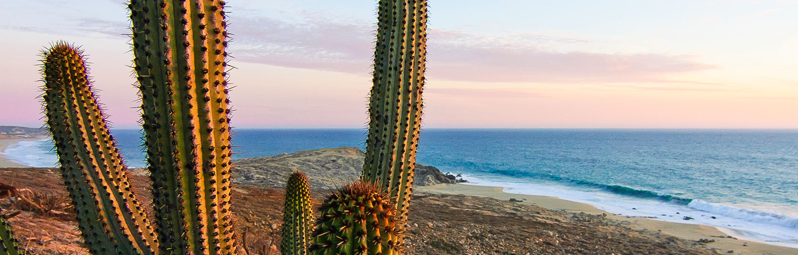 Hiking & Yoga Retreat in Mexico: Pitaya Cactus and Ocean View at Sunset