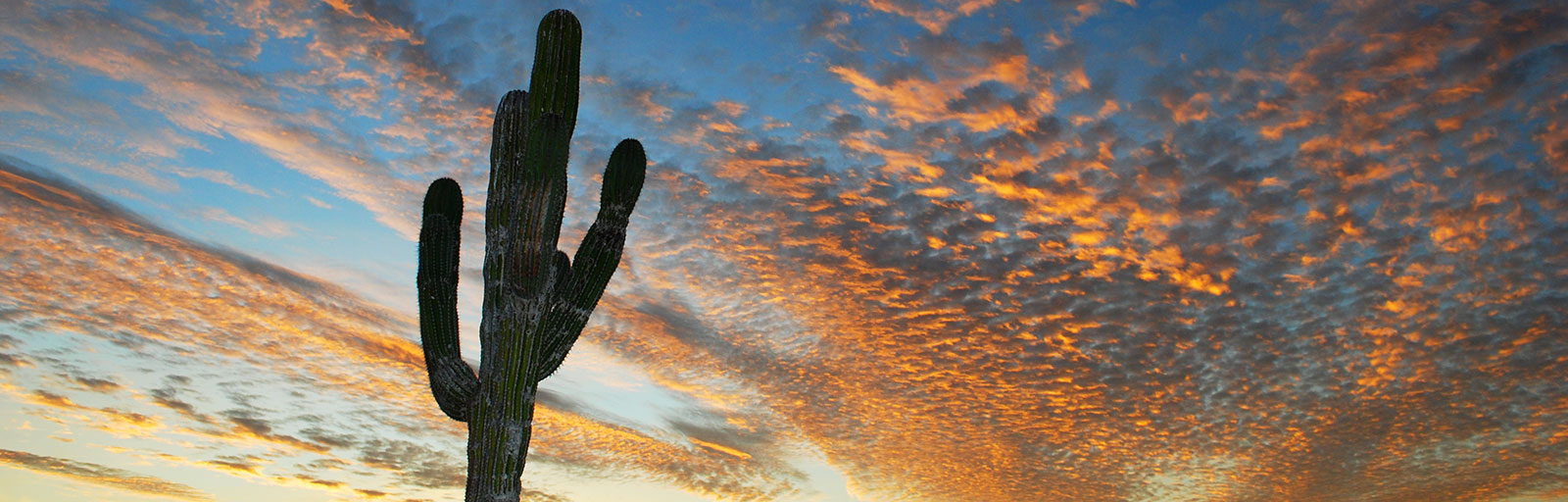 Meditation & Yoga Retreats in Mexico: Sunset with Cardon Cactus