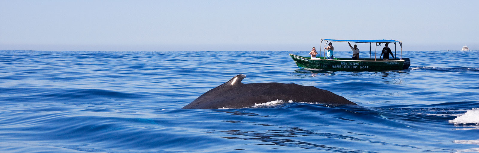 Whale Watching & Yoga Retreat in Mexico: Humpback Whale in Cabo Bay